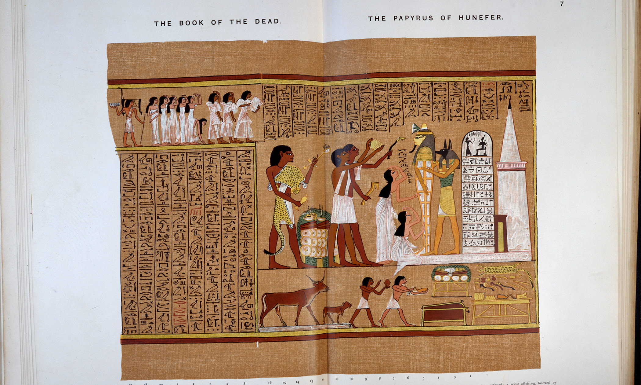 Ancient Egyptians | Egyptology | Maidstone Museum